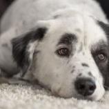 『この犬は普通の犬じゃありません「彼は数々の不幸を私に持って来てくれた」』の画像