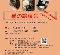 猫多頭飼育崩壊レスキュープロジェクト