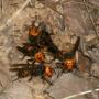 スズメバチより身近で怖い虫って存在するの?