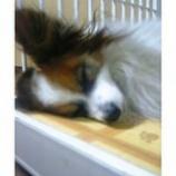 『おやすみなさい』の画像