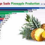 【動画】動くグラフで見る!世界のパイナップル生産 国別ランキング(1960 2019)