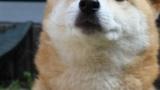 【画像あり】うちの犬が可愛すぎてヤバイ