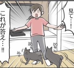 部屋によって猫の態度が違う疑惑が晴れた