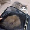 ポメラニアンと猫 1週間振りに再会した結果
