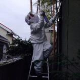『スズメバチの巣』の画像