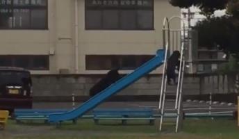 『ガチで犬が滑り台で遊んでたw』夢中になって滑ってる姿が可愛いと話題に!(動画あり)