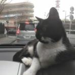 招き猫は 福を呼ぶ