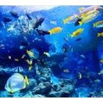 深海とか水族館に恐怖心あるやつwww