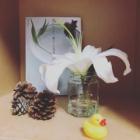 『読書感想文。花のある暮らしを、すぐに実践できる本→平井かずみ『花のしつらい、暮らしの景色』』の画像
