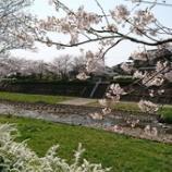 『【ながさき】春爛漫』の画像