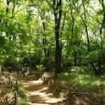誰にも見つからずに、27年間森の中で孤独に暮らしていた男が発見される…