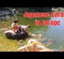 【悲報】池の水全部抜かれニシキゴイ1000匹死亡、被害総額5000万円