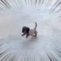 子イヌがこっちにやってきた。途中には段差がある。のぼれるかな? → 子犬はこうする…