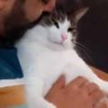 ネコが膝の上にいた。お父さんが撫でる → やっぱりヒゲですか…
