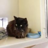 『世界一高齢の捨て猫』の画像