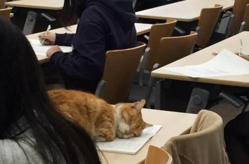【画像あり】にゃんさん、大学の講義中に堂々と居眠りwwwwwwwwのサムネイル画像