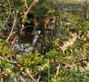 英国の小さき森にて超巨大な異形のネコに遭遇す!なんと体長3メートル!?