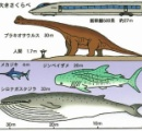 地球で一番大きな生物は?