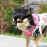 『SONY Rx100m7がやってきましたっ☆』の画像