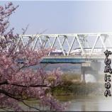 『両磐桜2021』の画像