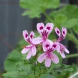 『5月の花』の画像