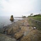 『新製品:LAOWA9mmF5.6の試写~三浦半島編② 2020/11/05』の画像
