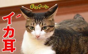 猫の「かまわないで」サイン