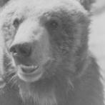 登別クマ牧場の歴代ボス紹介させてくれや