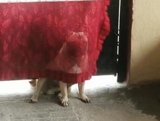 試される犬への愛情。飼い主がかまってくれないと隠れる犬