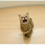 猫には地震予知能力があるのか? 京大猫研究チームに聞いた結果www