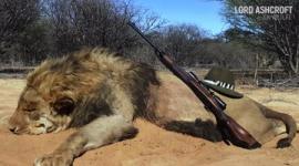 【狩猟】南アフリカで1万2000頭のライオンが観光客の射撃目的で飼育…潜入捜査のイギリス人が衝撃告白