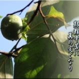 『青柿』の画像