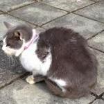 片山ゆうちゃん「江の島で猫の写真を撮った。首輪は付けてない」