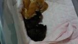 子猫5匹拾ったからアドバイスくれ → 子猫拾ったニートの末路www(※画像あり)
