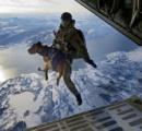 軍用犬「俺の戦争じゃなかった、人間にやれって言われたんだ!それが国に戻ってみれば飼犬にもなれない