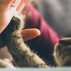 18年間一緒に暮らした猫が旅立ち、号泣する姑 → 私「お義母さん、元気出して」姑「そうね。このままじゃ、あの子が成仏できないわね」→ なんと数日後…