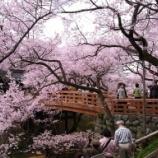 『いつか行きたい日本の名所 高遠城址公園』の画像