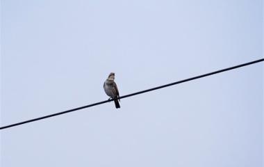 『冬庭に来る野鳥ツグミ・コゲラ・四十雀写真集』の画像