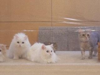 こりゃニャンじゃい?猫ズ、見えない壁に困惑する