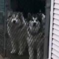 【イヌ】 道を歩いていたら柵の向こうに犬がいた。こんにちわん♪ → 2匹の犬はこうなります…