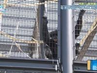 【日向坂46】今週俺チンパンジー役で出たけどお前ら今回何役だった?