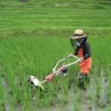 『草取り、草取り、草取りです!』の画像