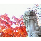 『初紅葉』の画像
