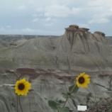 『行った気になる世界遺産 州立恐竜公園』の画像