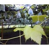 『秋の味覚』の画像