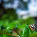 しみずの昆虫撮影記