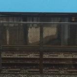 『なんと!戸田公園駅線路脇の壁に浮かぶ女の子の顔・・・』の画像