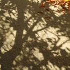 『燃え尽きた紅葉・ラスト・イエロー』の画像