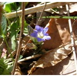 『春の瞳』の画像