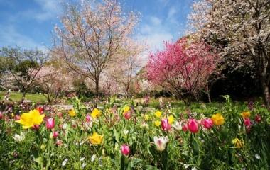 『投稿:LAOWA9mmF2.8 ZERO-D MFTによる横浜里山ガーデン 2021/03/31』の画像